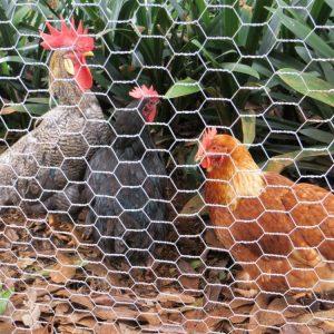 توری مرغی گالوانیزه
